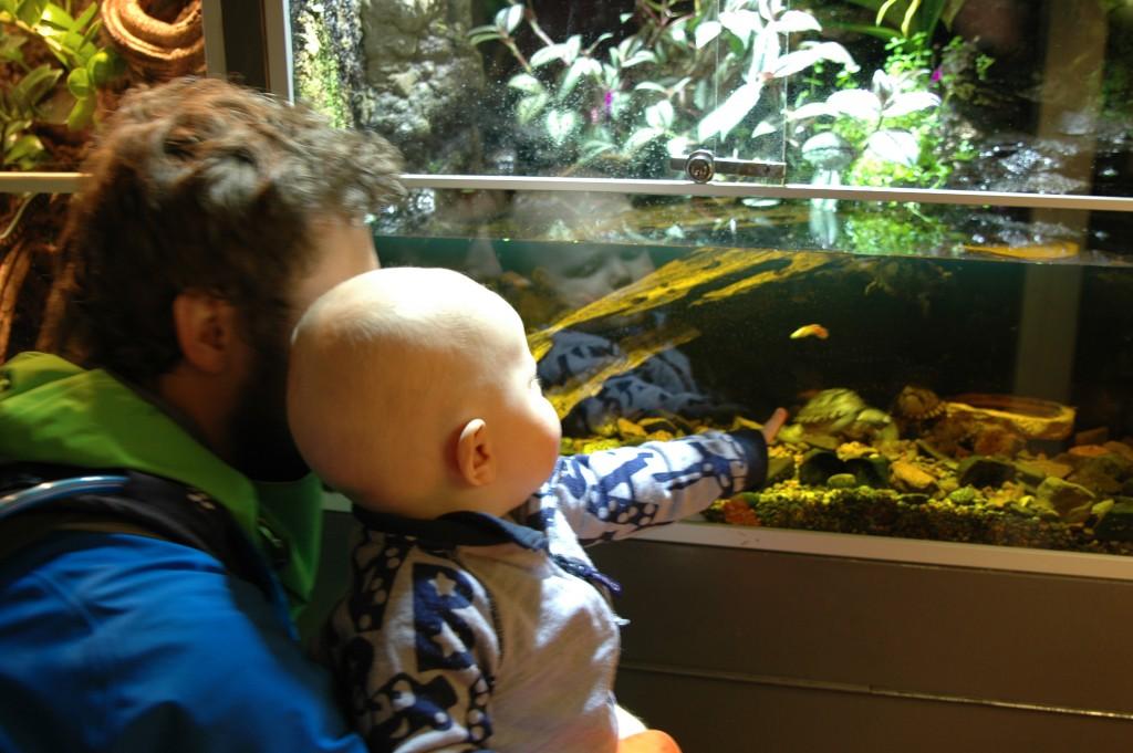 Skilpader i Oslo Reptilpark