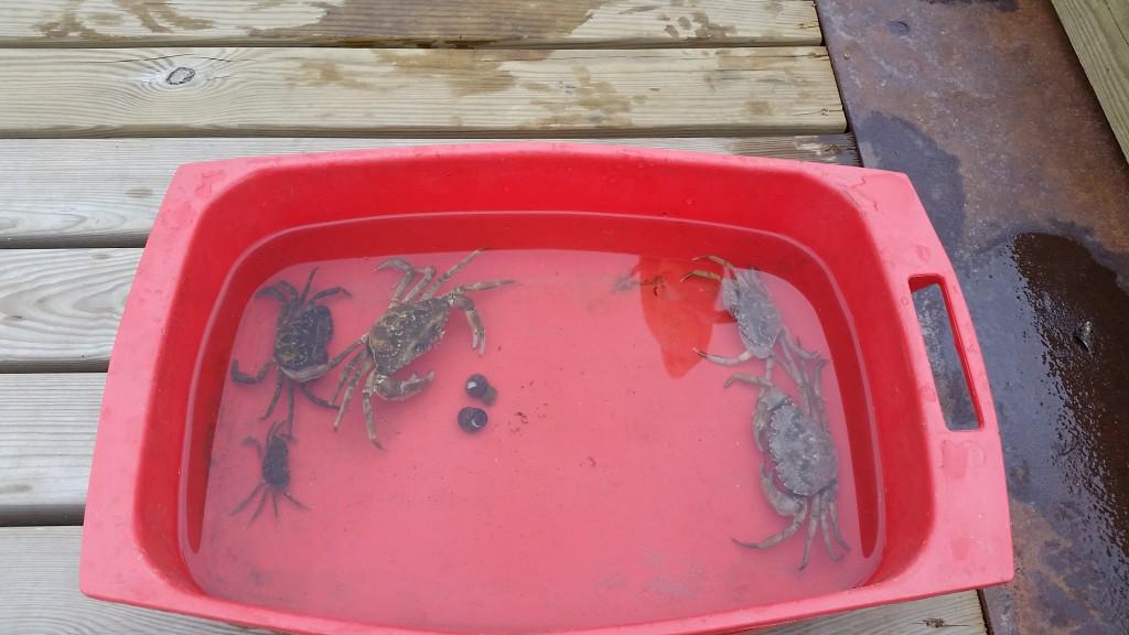 Flotte krabber